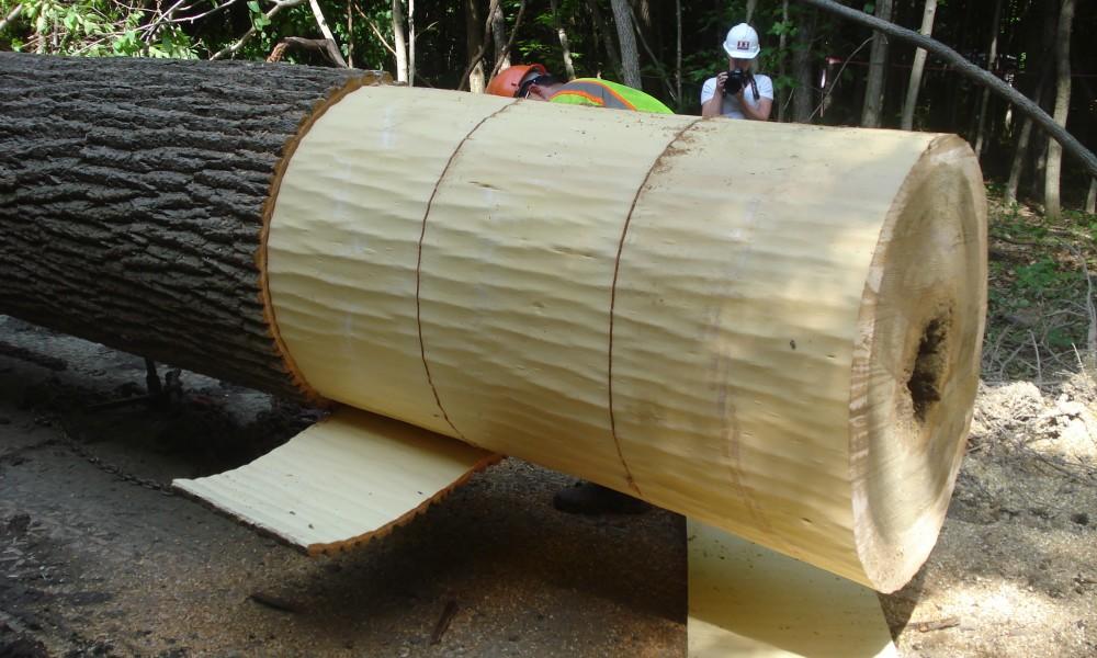 First harvest of bark facade