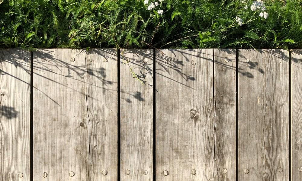 Pine tree deck