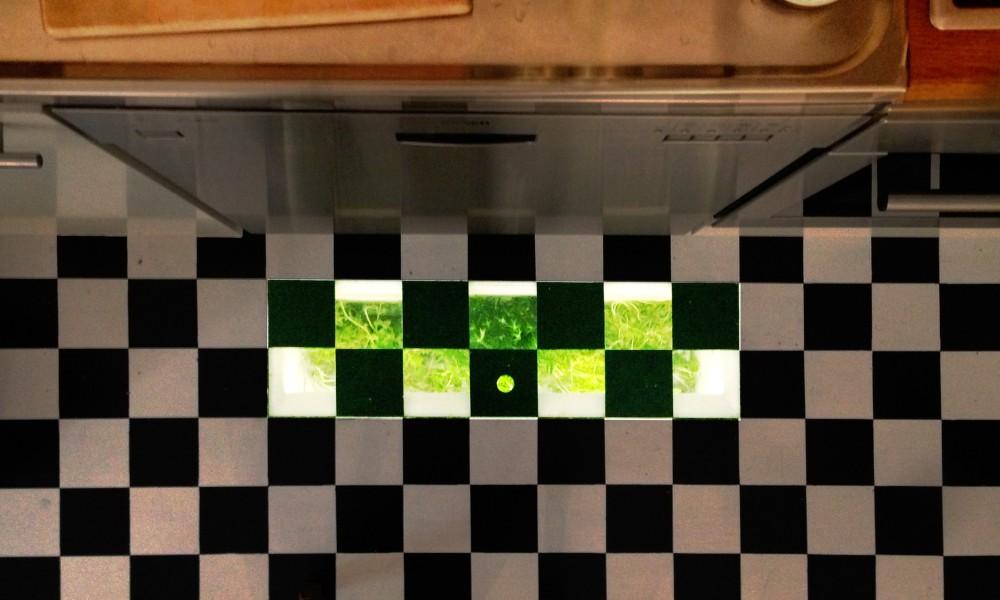 Kitchen herb patch