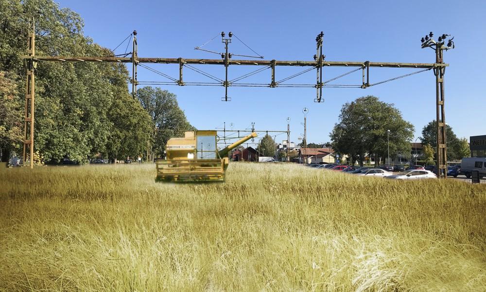 Tibro farmers field